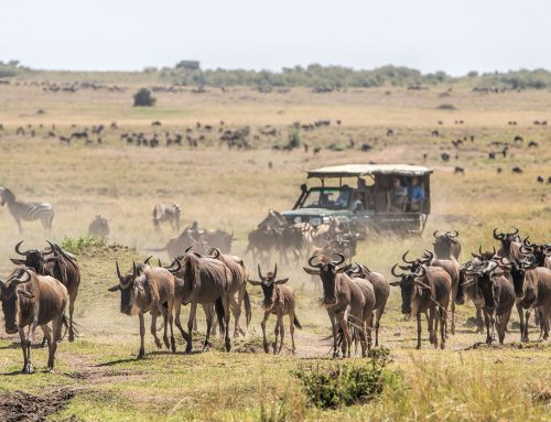 Kenya Scenic Explorer
